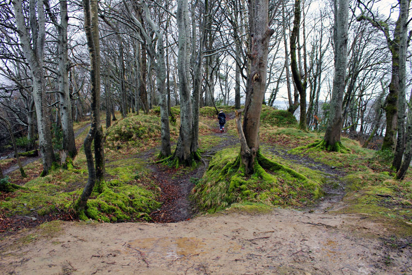 Wald Killarney